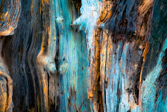 Colorful textured tree