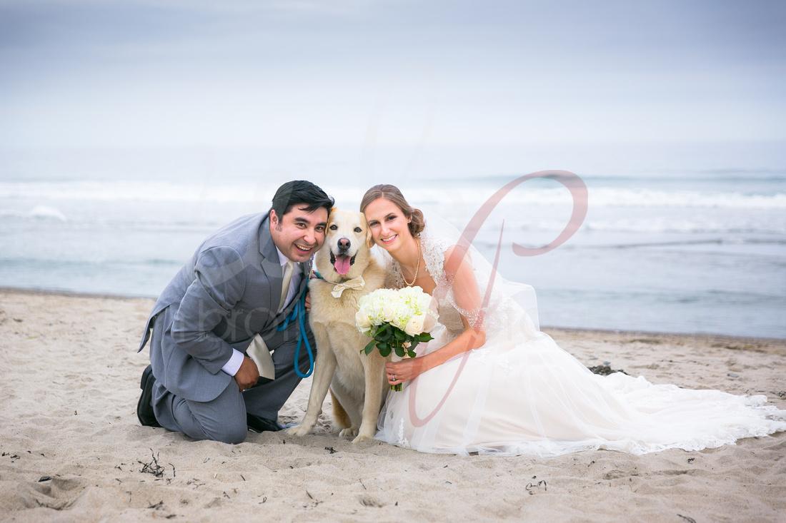 wedding couple on the beach with their dog